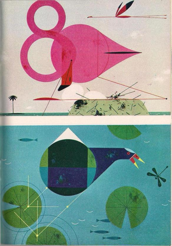 Top: Flamingo by Charley Harper Bottom: Purple Gallinule by Charley Harper