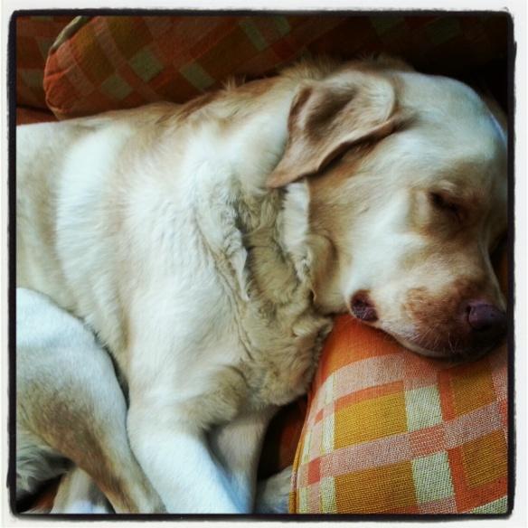 Napping Crosley