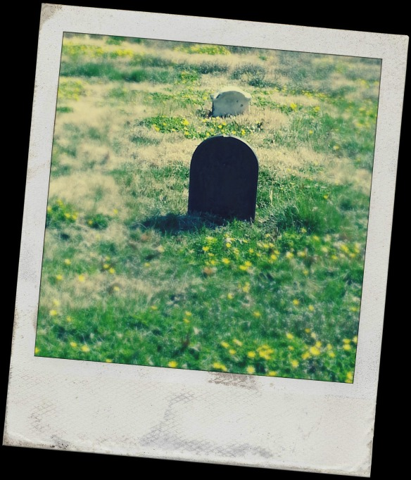 Two graves and wildflowers