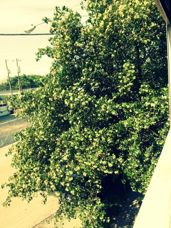 Window Tree Blooming