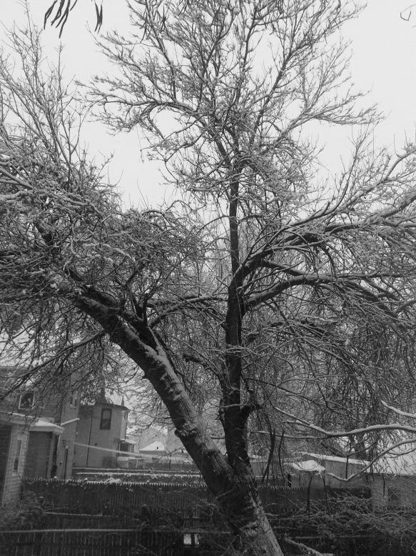 Backyard Tree in Snow