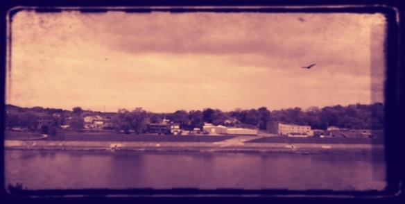 River/hawk