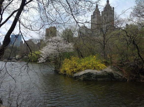 Central Park in springtime!