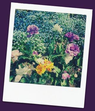 Flowers at Kingwood Center Gardens