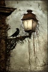Bird on a Lantern by Arthur Rackham