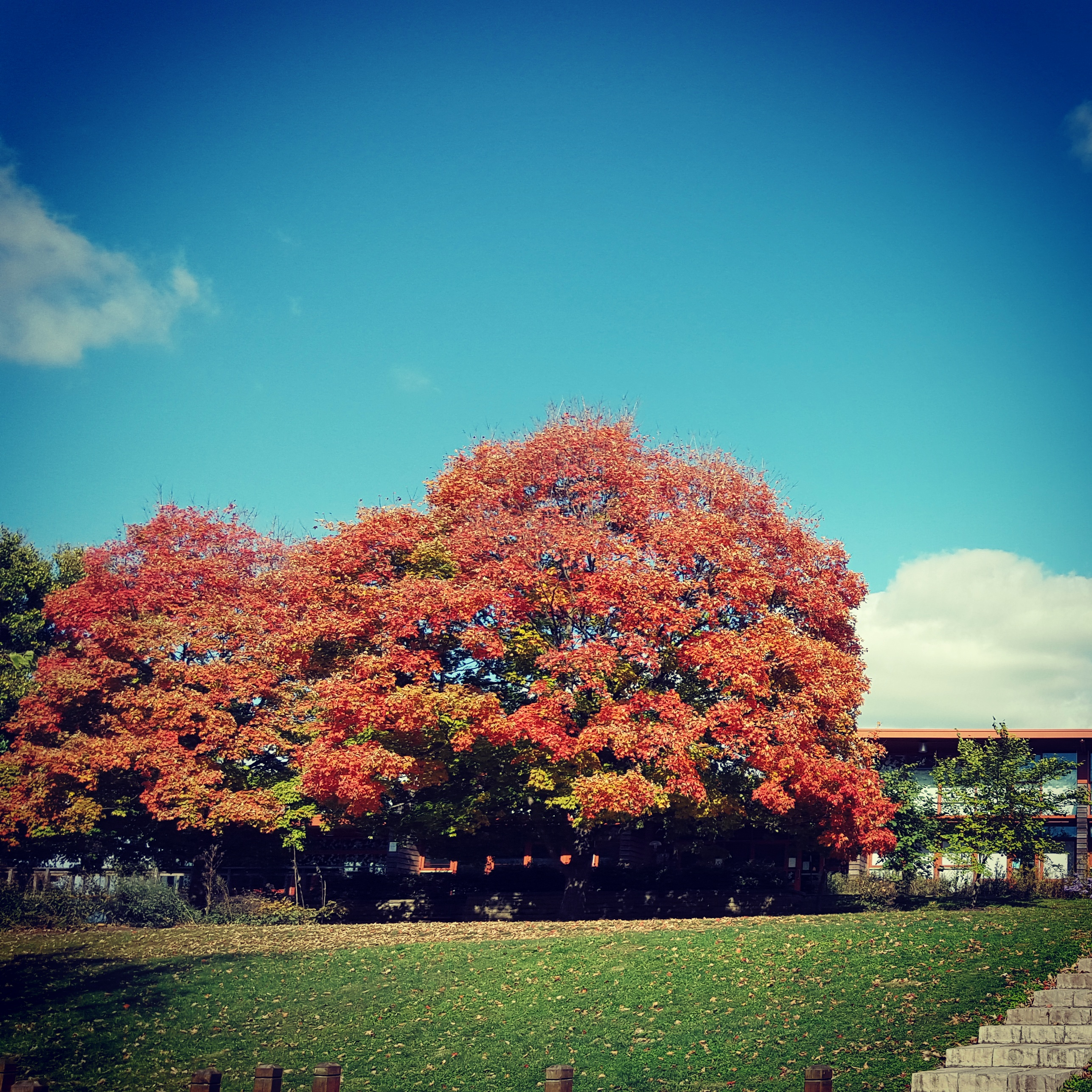 Oh, glorious autumn!